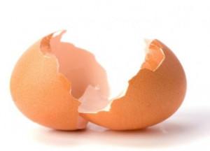 tojáshéj